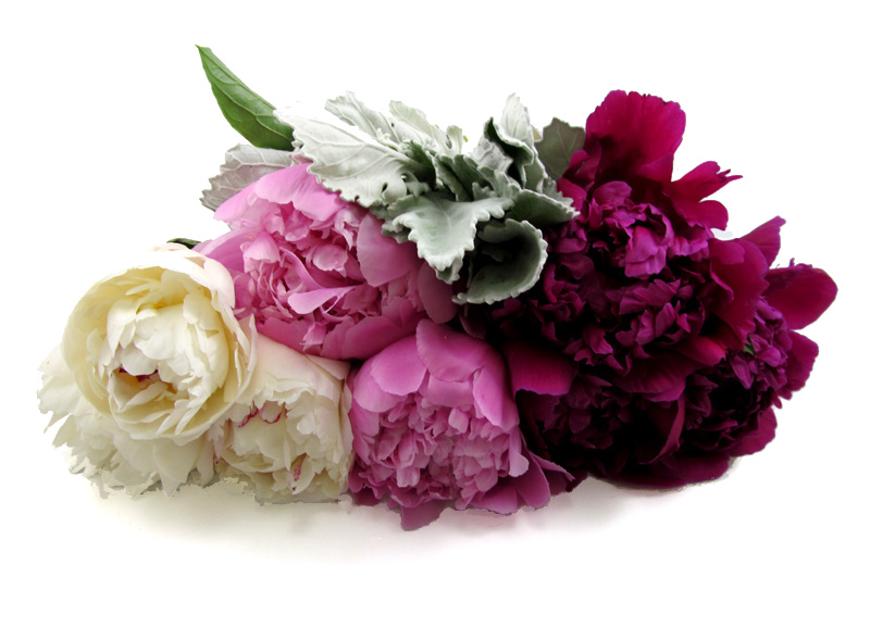 Flowers You Need 2