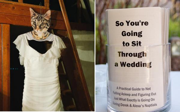 cat program find websites for pictures on Pinterest.