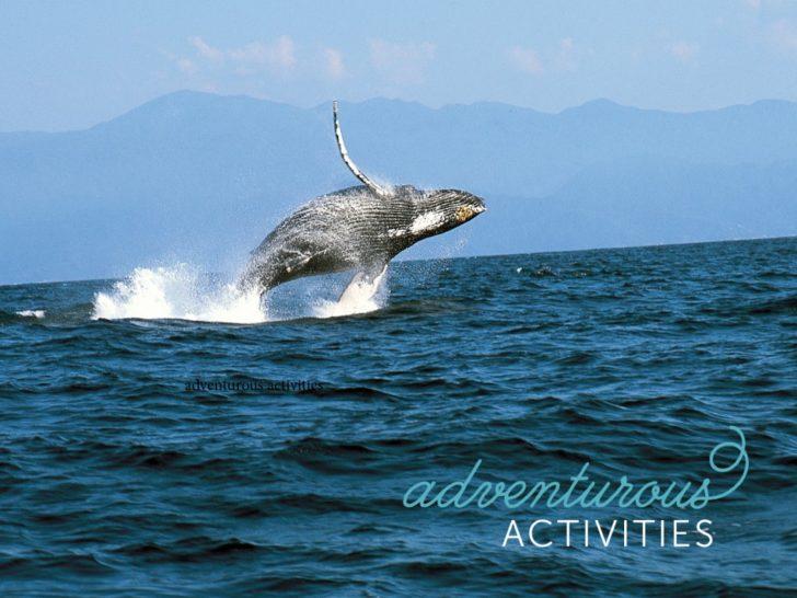Puerto Vallarta Weddings + Honeymoons - adventurous activities