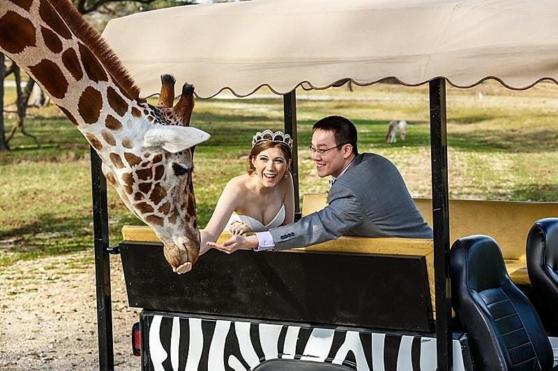safari wedding photos