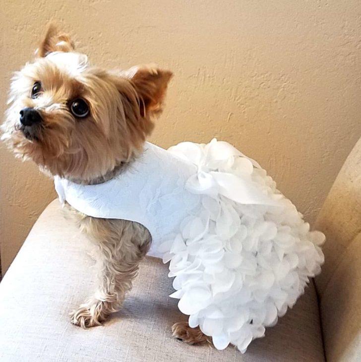Dog Wedding Dress from Etsy