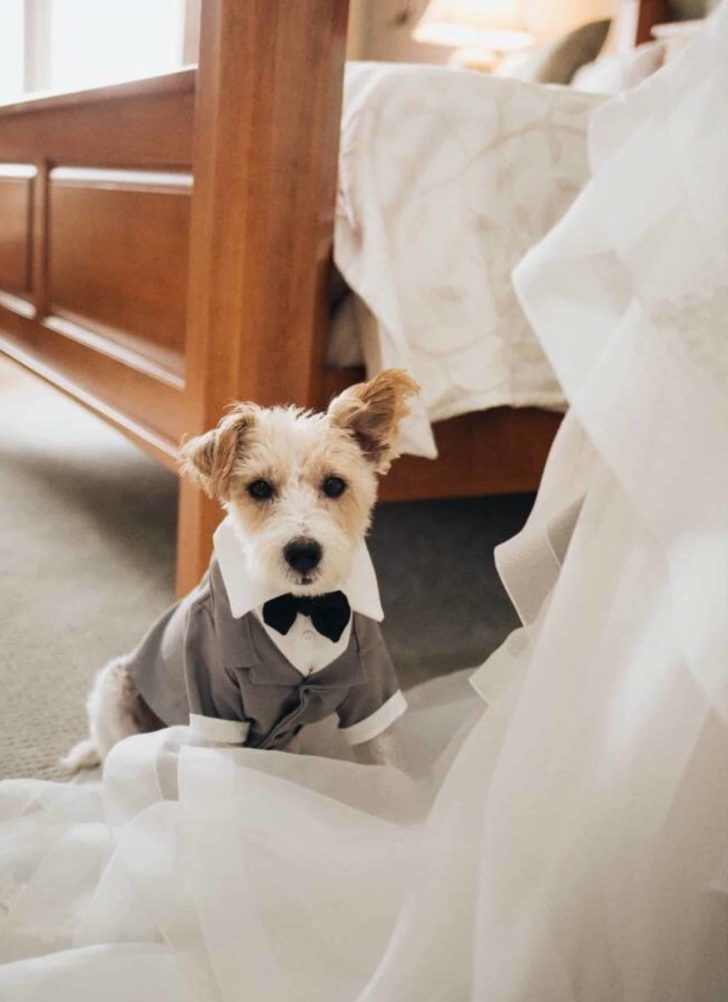 dog wedding suit