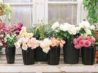 BloomCultureFlowers