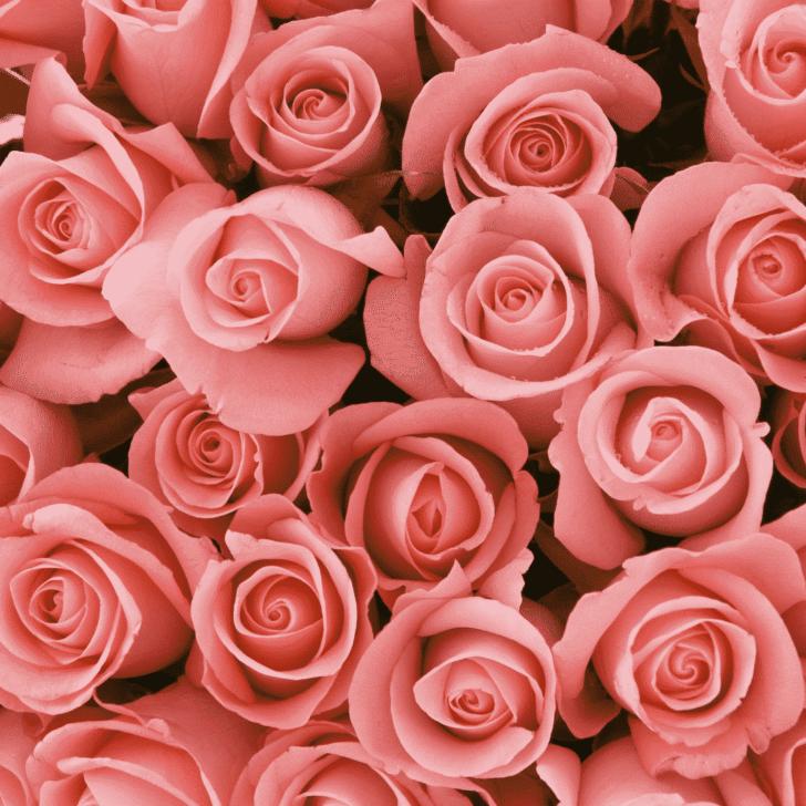 money saving flower advice weddings