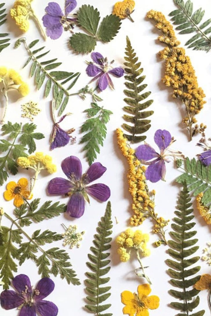 GardenBeautyLV on Etsy - Dried Pressed Flowers for Crafting