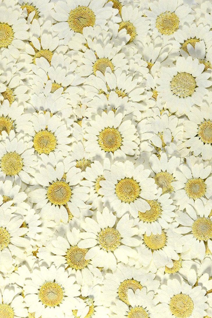 Misutikku on Etsy -Pressed Flower Confetti