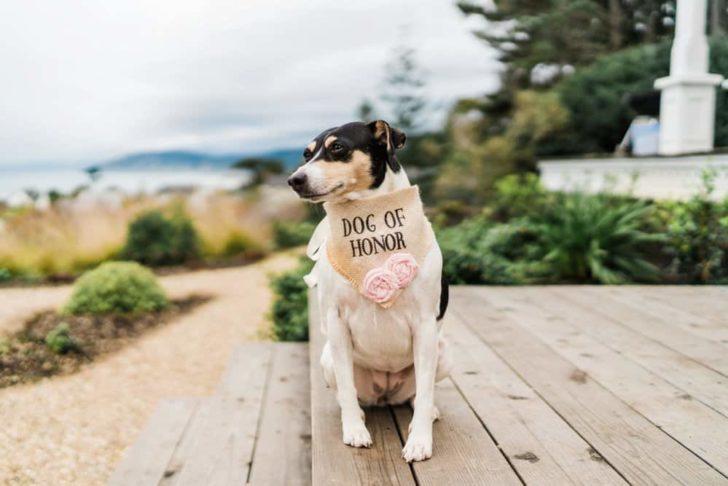 Wedding Dog | Dog of Honor