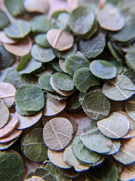 eco-friendly-leaf confetti