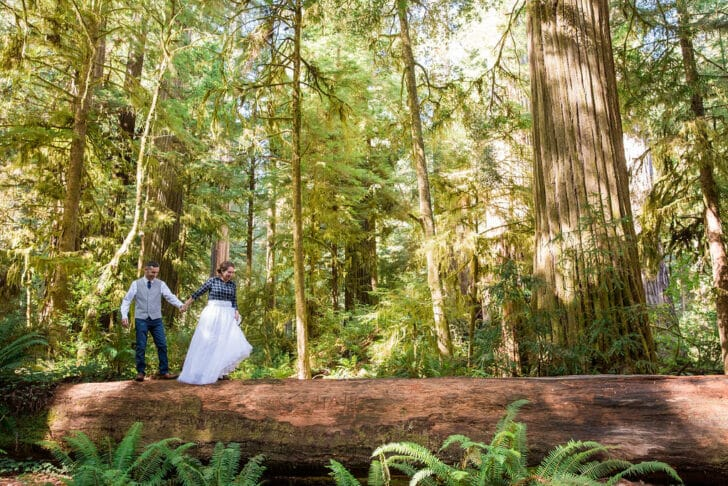 Redwoods Elopement Session by M. Laine Photography