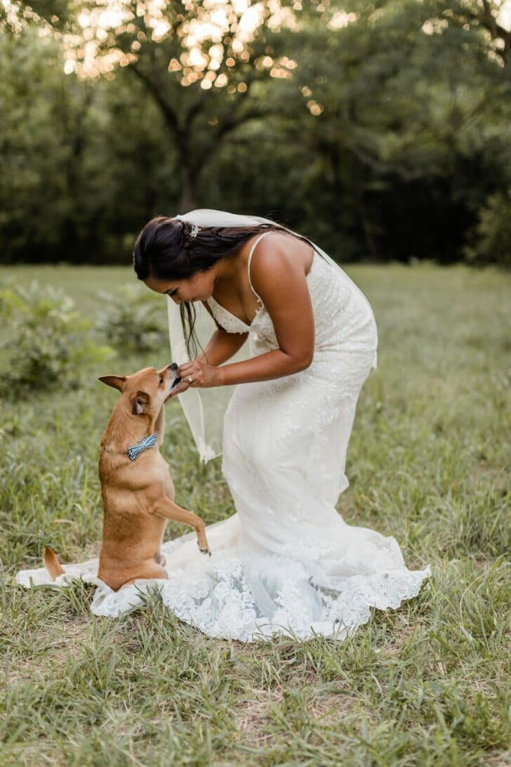 dogs at weddings -bride and dog