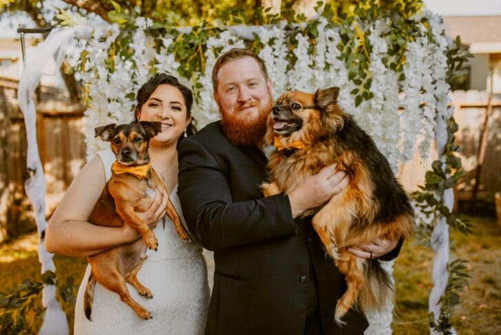 bride and groom and dogs